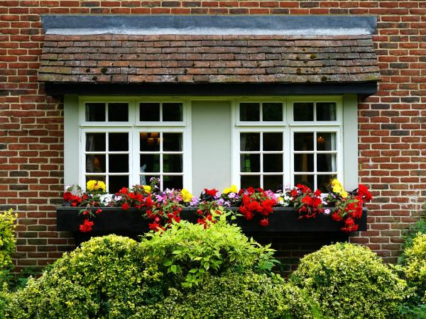 New Window with Flowers